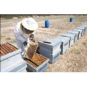 Natural Multiflora Bee Honey
