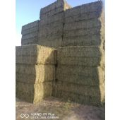 Hay bales for export